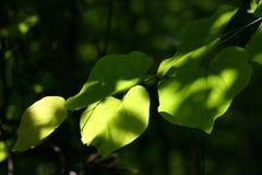 Bladeren met interessant licht Royalty-vrije Stock Afbeeldingen