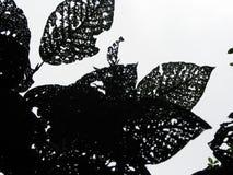 Bladeren met natuurlijke gaten royalty-vrije stock fotografie