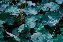 Bladeren met regendruppels stock afbeeldingen