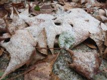 Bladeren met Sneeuw over worden berijpt die Royalty-vrije Stock Afbeelding