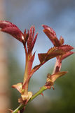 Bladeren met Spinneweb Royalty-vrije Stock Fotografie