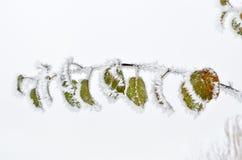 Bladeren met vorst in het de winterhout dat worden behandeld royalty-vrije stock fotografie