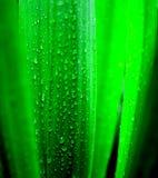 Bladeren met waterdalingen Stock Afbeeldingen