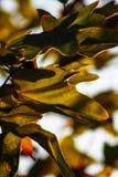 Bladeren met Zonsonderganglicht Royalty-vrije Stock Foto's