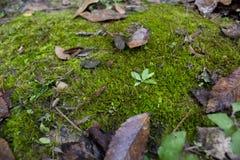 Bladeren, mos en vegetatie Royalty-vrije Stock Afbeeldingen