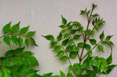 Bladeren in muur Stock Foto