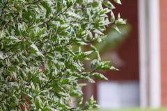Bladeren in Nadruk Stock Afbeeldingen