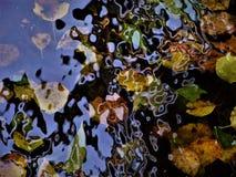 Bladeren onder het water in Swatty stock foto's