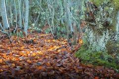 Bladeren onder het zonlicht in het bos royalty-vrije stock afbeelding
