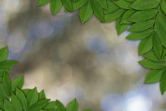 Bladeren op aardachtergrond, Bladerenkader Stock Afbeelding