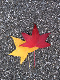 Bladeren op asfalt royalty-vrije stock afbeeldingen