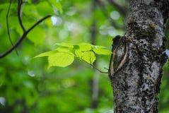 Bladeren op boom in het bos royalty-vrije stock foto's