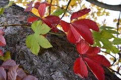 Bladeren op de boom Stock Afbeelding