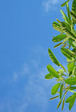 Bladeren op de hemel Royalty-vrije Stock Afbeelding