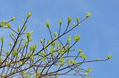 Bladeren op de hemel Royalty-vrije Stock Afbeeldingen