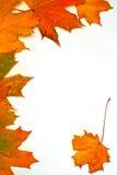 Bladeren op de herfst, Stock Fotografie