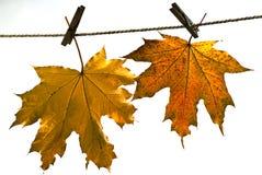 Bladeren op de herfst, Stock Afbeeldingen