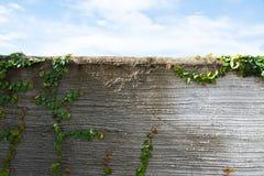 Bladeren op de muur Royalty-vrije Stock Fotografie