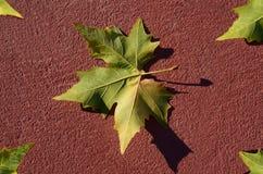 Bladeren op de rode grond Royalty-vrije Stock Foto
