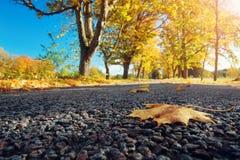 Bladeren op de weg stock fotografie