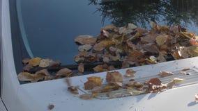 Bladeren op een autokap stock videobeelden