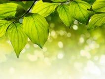 Bladeren op een boom Stock Fotografie