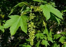Bladeren op een boom Royalty-vrije Stock Fotografie