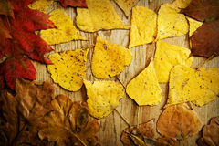 Bladeren op een raad stock afbeeldingen