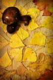 Bladeren op een raad stock afbeelding