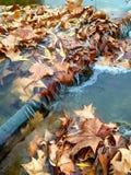 Bladeren op een sluis in een stroom Stock Afbeeldingen