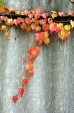 Bladeren op een takje in de herfstkleuren royalty-vrije stock afbeelding
