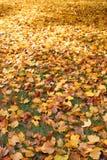Bladeren op gazon Stock Foto's