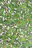Bladeren op gras Stock Fotografie