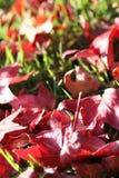 Bladeren op gras Royalty-vrije Stock Foto's