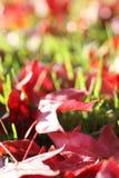 Bladeren op gras Royalty-vrije Stock Afbeeldingen