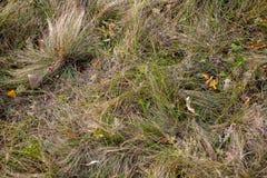 Bladeren op gras royalty-vrije stock fotografie