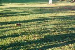 Bladeren op gras in zonnig ochtendlicht Stock Foto's