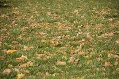 Bladeren op groen royalty-vrije stock fotografie