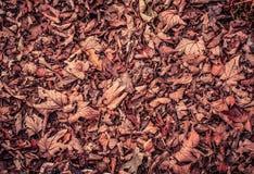 Bladeren op grond Stock Foto