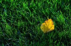 Bladeren op het gazon Royalty-vrije Stock Afbeeldingen