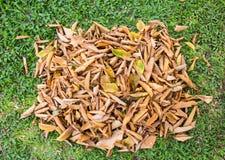 Bladeren op het gras Stock Fotografie