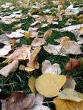 Bladeren op het gras Stock Foto