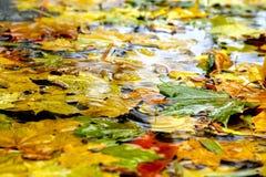 Bladeren op het koele blauwe water Stock Foto