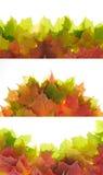 Bladeren op het wit. Royalty-vrije Stock Afbeelding
