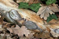 Bladeren op hout stock afbeeldingen