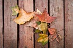 Bladeren op houten vloer Stock Afbeeldingen