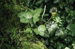 Bladeren op mos Stock Afbeeldingen