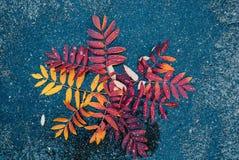 Bladeren op nat asfalt royalty-vrije stock foto's