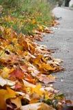 Bladeren op straat Royalty-vrije Stock Foto
