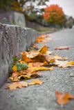 Bladeren op straat stock foto